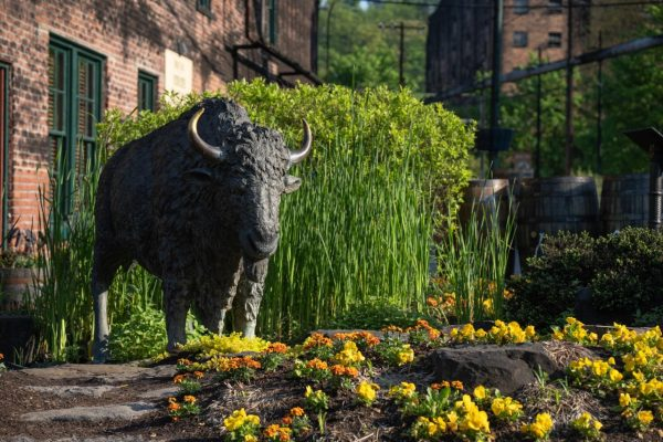 Download Buffalo statue on grounds of Buffalo Trace Distillery
